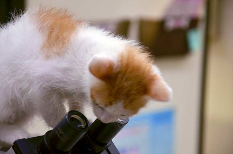 A furry patient with one of our microscopes